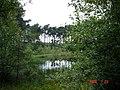 Delamere - Black Lake in Delamere Forest - geograph.org.uk - 207832.jpg