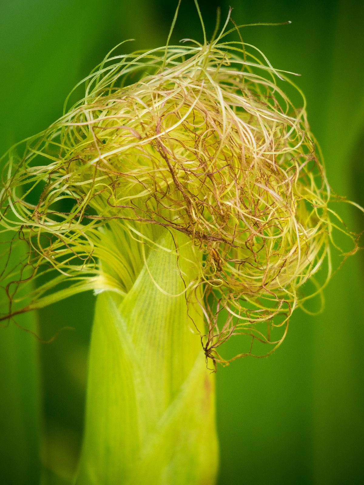 Phytothérapie  des Racines et des Herbes  Documentaire FR5 enregistré par Naturaves TV