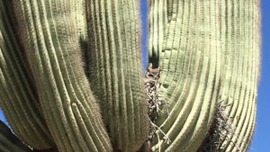 File:Desert Vegetation & Wildlife Phoenix, AZ.webm
