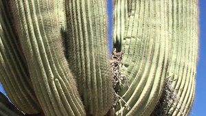 File:Desert Vegetation & Wildlife Phoenix, AZ.webm