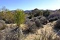 Desert abundance (11658088106).jpg