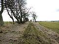 Devil's Causeway heading for Hart Burn ford - geograph.org.uk - 1753411.jpg
