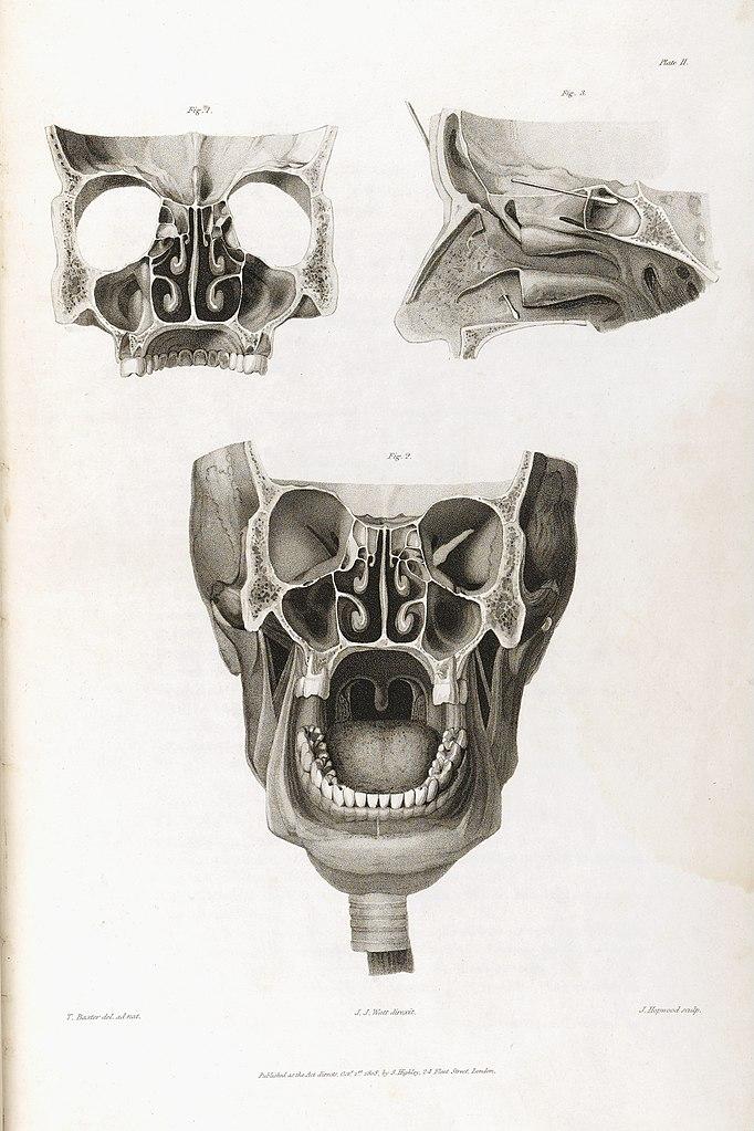 Filediagram Of The Skull J J Watts 1809 Wellcome L0034612g