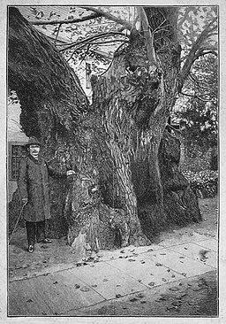 Die Gartenlaube (1890) b 130