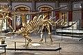 Dinosaur Hall, Berlin Natural History Museum (4) (28403404209).jpg