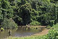 District-Tawau Sabah Mosquito-infested-pond-02.jpg