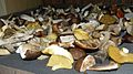 Dried polish mushrooms.JPG