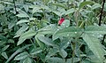 Droplets On Leaves After Rain.jpg