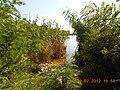 Druzhba cottages, Chervona Sloboda, Cherkas'ka oblast, Ukraine - panoramio (2).jpg