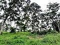 Durian Farm.jpg