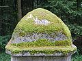 Einsteigturm 84 Probstwald 2.JPG