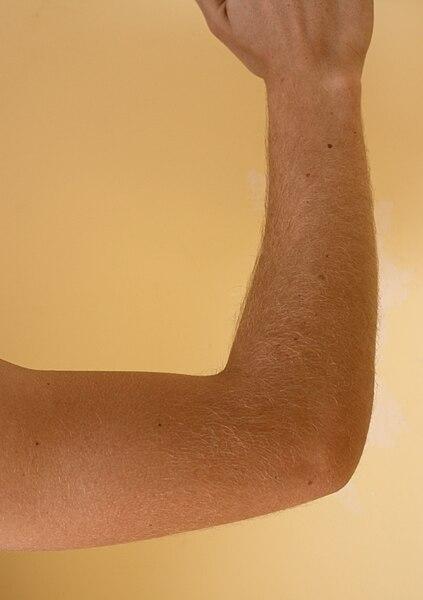 File:Elbow (body).jpg