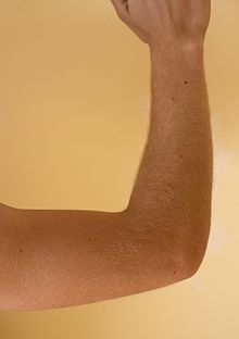 elbow - Wiktionary