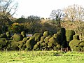 Elizabethan Topiary - Sydling St Nicholas - geograph.org.uk - 1042825.jpg