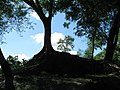 Entry of the mound of Chandraketugarh 01.jpg