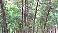 Essentuki, Stavropol Krai, Russia - panoramio (109).jpg