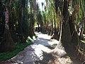 Estrada do Parque do Inhotim.jpg