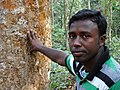 Eusuf Ali - Guide for Green Leaf Eco-Tours - Lawachara National Park - Outside Srimangal - Sylhet Division - Bangladesh (12924913163).jpg