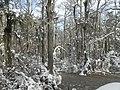 FL Swamp in Snow (5304217654).jpg
