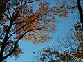 Fall - Guelph.JPG