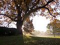 Fall - Nazareth College (8509493847).jpg