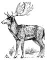 Fallow Deer (PSF).png