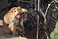Family Love of monkeys.jpg