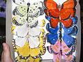 Farfalle finte - Fake Butterflies.JPG