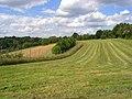 Farmland, Cookham - geograph.org.uk - 856650.jpg