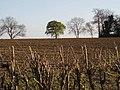 Farmland near Husbands Bosworth - geograph.org.uk - 164634.jpg