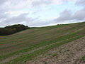 Farmland near Warren Farm - geograph.org.uk - 265576.jpg