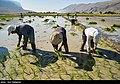 Fars Province 2020 (15).jpg