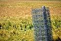 Fence (14510319610).jpg