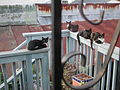 Feral or stray cats in New Orleans -a.jpg