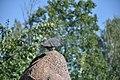 Feral pigeon in Nizhny Novgorod 03.jpg