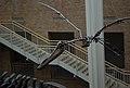 Fernbank Museum - Atlanta - Flickr - hyku (21).jpg