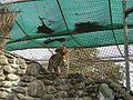 Ferocious Leopard.jpg