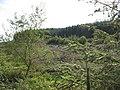 Ffridd Lwyd Forest - geograph.org.uk - 534750.jpg
