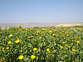 Field of Flowers, Alamarvdasht طبیعت علامرودشت - panoramio.jpg