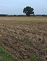 Fields near Cobble Hall, Catwick - geograph.org.uk - 1497747.jpg