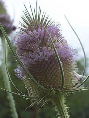 Fleur 9 - VTdJ