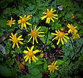 Flickr - Nicholas T - Shenks Ferry Wildflower Preserve (2).jpg