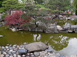 Flickr - brewbooks - Seike Japanese Garden with Turtle.jpg