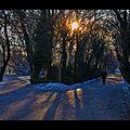 Flickr - fusion-of-horizons - Cișmigiu (2).jpg
