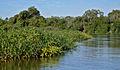 Flickr - ggallice - Pantanal (1).jpg