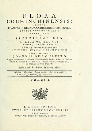 Longan - The longan was described in Joao de Loureiro's work, Flora Cochinchinensis, published in 1790.