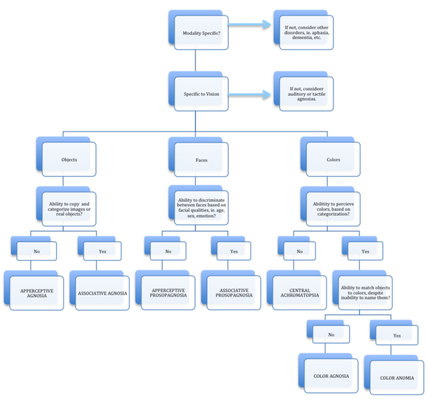Fileflowchart For Assessment Of Visual Agnosiasg Wikimedia Commons
