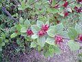Flower0055.jpg