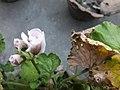 Flower20180527 185059.jpg