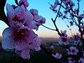 Flower (108205971).jpeg